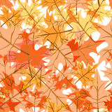 Seamless structure consisting of maple leaves Stock Image