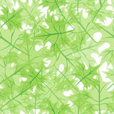 Seamless structure maple leaves Royalty Free Stock Images
