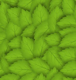 Seamless stylish pattern with green leaves Royalty Free Stock Photo