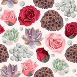 Seamless succulent and roses Royalty Free Stock Images