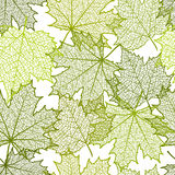 Seamless summer background and leaves of a maple. For design Stock Photos