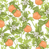 Seamless summer floral pattern Stock Photos