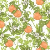 Seamless summer floral pattern Stock Photos