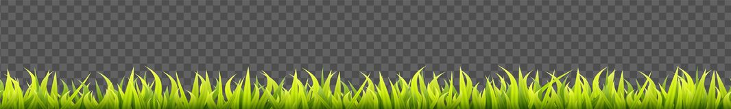 Seamless summer grass panorama. Green springtime herbal lawn. Field or meadow horizontal decoration lines.  vector illustration