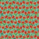 Seamless summer pattern of red poppies on the grass. Colorful background in the form of a flower glade. Hand drawn watercolor illustration. Can be used for royalty free stock photo
