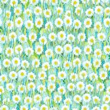 Seamless summer pattern of white chamomiles on the grass. Colorful background in the form of a flower glade. Hand drawn watercolor illustration. Can be used royalty free stock photography