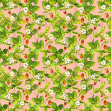 Seamless summer wallpaper with ripe wild forest strawberry. Aquarelle botanical drawing on pink background Royalty Free Stock Photos