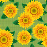 Seamless from sunflowers. Stock Images