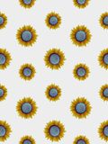 Seamless sunflowers Stock Photos