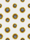 Seamless sunflowers stock photos