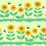 Seamless with sunflowers Stock Image