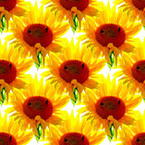 Seamless sunflowers pattern on white background. Seamless sunflowers pattern bumblebees summer Stock Photography