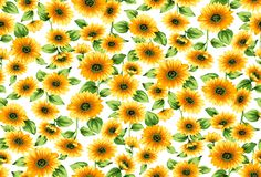 Seamless sunflowers pattern on a white background vector illustration