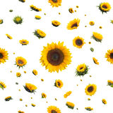 Seamless Sunflowers Royalty Free Stock Photo