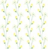seamless textur för blomma Royaltyfri Fotografi