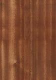 seamless textur för eucalyptus Royaltyfria Foton