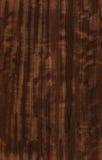 seamless textur för eucalyptus Royaltyfri Foto