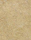 seamless textur för sand Royaltyfri Foto