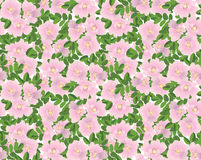Seamless textur med blommor stock illustrationer