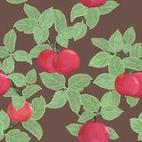 Seamless  texture with apples Stock Images