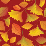 Seamless texture with autumn maple leaves Royalty Free Stock Photos