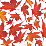 Seamless texture with autumn maple leaves Royalty Free Stock Images