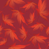 Seamless texture with autumn maple leaves Stock Image