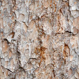 Seamless texture - bark of pine stock image