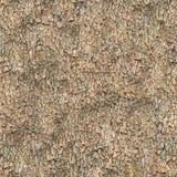 Seamless Texture. Bark. Royalty Free Stock Photo