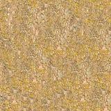 Seamless Texture of Bark. Royalty Free Stock Photo