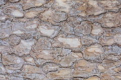 Seamless texture of bark . Royalty Free Stock Photography