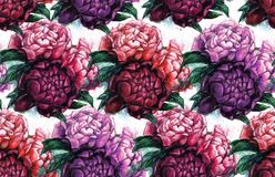 Seamless texture with beautiful peonies. Watercolor illustration with flowers. Gentle style. Repeating background. Tile pattern Royalty Free Stock Photography