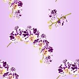 Seamless texture beautiful Phalaenopsis Orchid spotted white and purple stem with flowers and buds vintage vector closeup edi Stock Photography