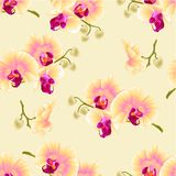 Seamless texture beautiful Phalaenopsis Orchid Yellow stem with flowers and  buds  vintage  vector closeup editable Royalty Free Stock Images