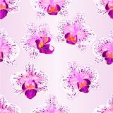 Seamless texture beautiful purple and white Orchid Phalaenopsis flower  vintage closeup vector  illustration editable Stock Images