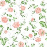 Seamless texture of beautiful roses for textiles Royalty Free Stock Photography