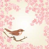 Seamless texture bird and sakura vector Stock Photography