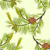 Seamless texture blooming pine tree and pine cones vector Royalty Free Stock Images
