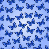 Seamless texture blue butterflies  Stock Photography