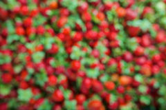 Seamless texture of blurred unfocused strawberries Royalty Free Stock Image