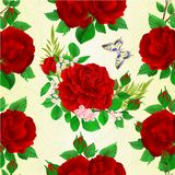Seamless texture bouquet of red  roses and rosebuds and butterfly festive botanical background vintage vector illustration editabl. E hand draw Royalty Free Stock Photography