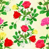 Seamless texture Bouquet of rosebuds red white and yellow roses vintage vector illustration editable Stock Photography
