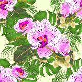 Seamless texture bouquet with tropical flowers beautiful purple and white orchid Phalaenopsis palm,philodendron and ficus on a stock illustration