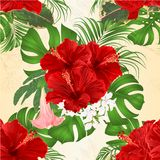 Seamless texture bouquet with tropical flowers floral arrangement, with beautiful hibiscus, palm,philodendron and ficus and Brugma. Nsia vintage vector Stock Images