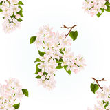 Seamless texture branch of apple tree with flowers  vintage  spring background vector Stock Photos