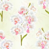 Seamless texture branch orchid Phalaenopsis white flowers and leaves tropical plants stem and buds natural background vintage ve. Ctor botanical illustration for Royalty Free Stock Photos