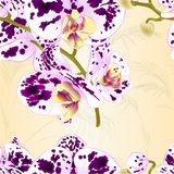 Seamless texture branch orchids spotted purple and white flowers  Phalaenopsis tropical plant on a nature background  vintage vect. Or botanical illustration for Stock Images