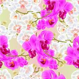 Seamless texture Branch orchids white and purple flowers Phalaenopsis tropical plant stems and buds vintage vector botanical il. Lustration for design hand draw royalty free illustration