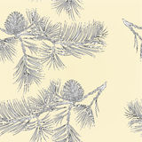 Seamless texture branch Pine with pine cone as vintage engraving vector Stock Photos