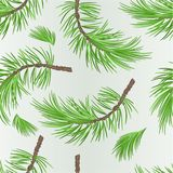 Seamless texture branch pine tree botanical background  vintage vector illustration editable. Hand draw Royalty Free Stock Images